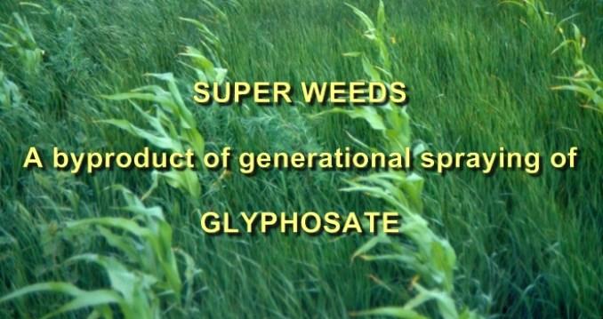superweeds 1