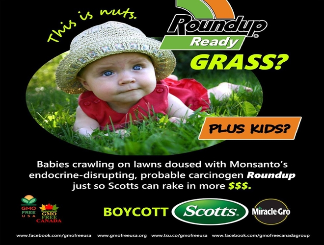 roundup ready grass