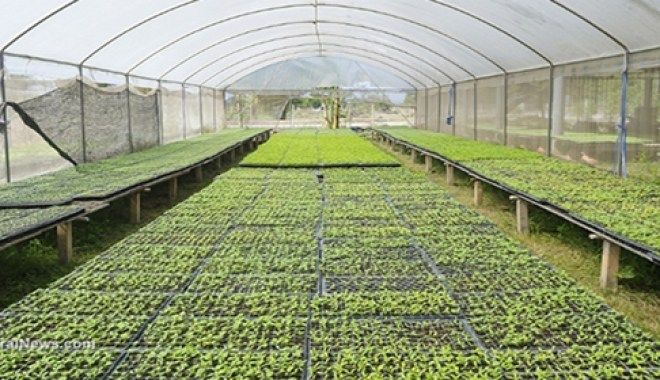 greenhouse-vegetables-plants-growing-farm