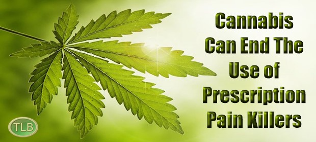 Image result for How Cannabis Can End the Use of Dangerous Prescription Pain Killers