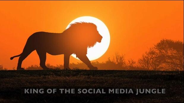 Lion – Large
