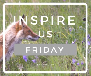 The Animal Edit - FB Post - Inspire us Friday