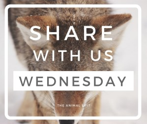 The Animal Edit FB Post - Sharing Wednesday