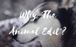 Why 'The Animal Edit'
