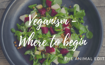 Some of the basics of veganism and how to begin