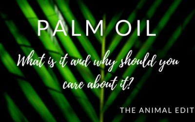 What is palm oil and why should you care about it?