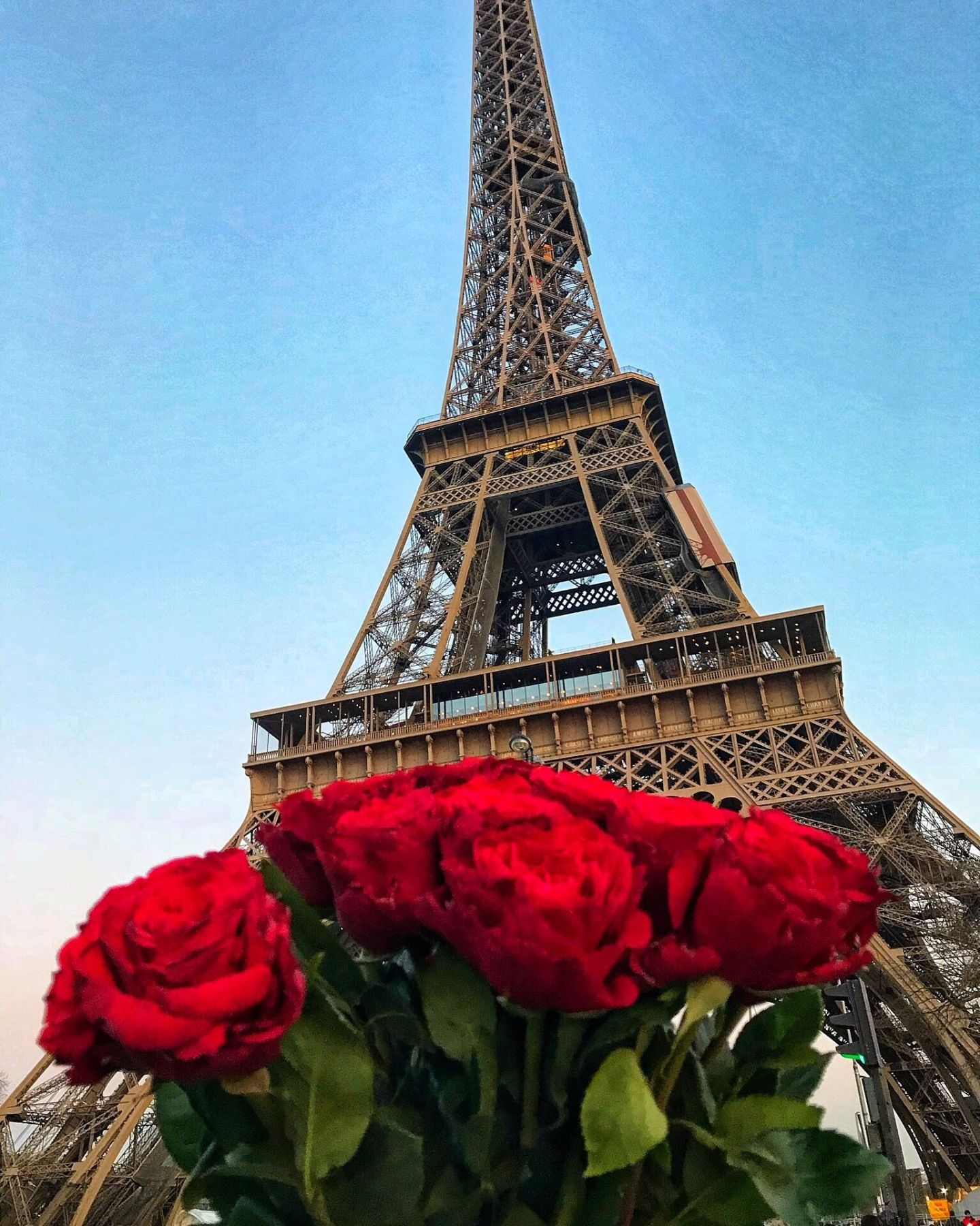 Red roses under The Eiffel Tower