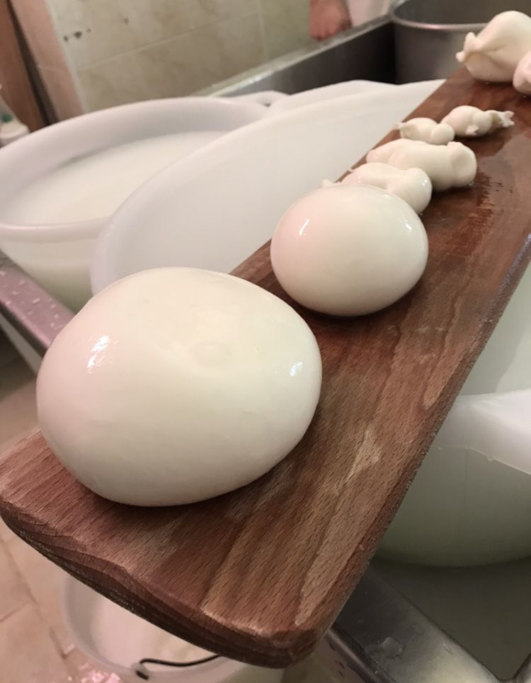 Freshly made mozzarella balls