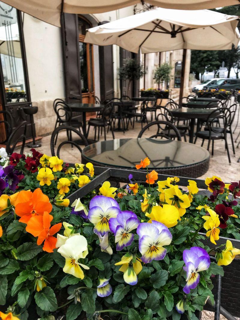 Pansies adorning a restaurant Locorotondo