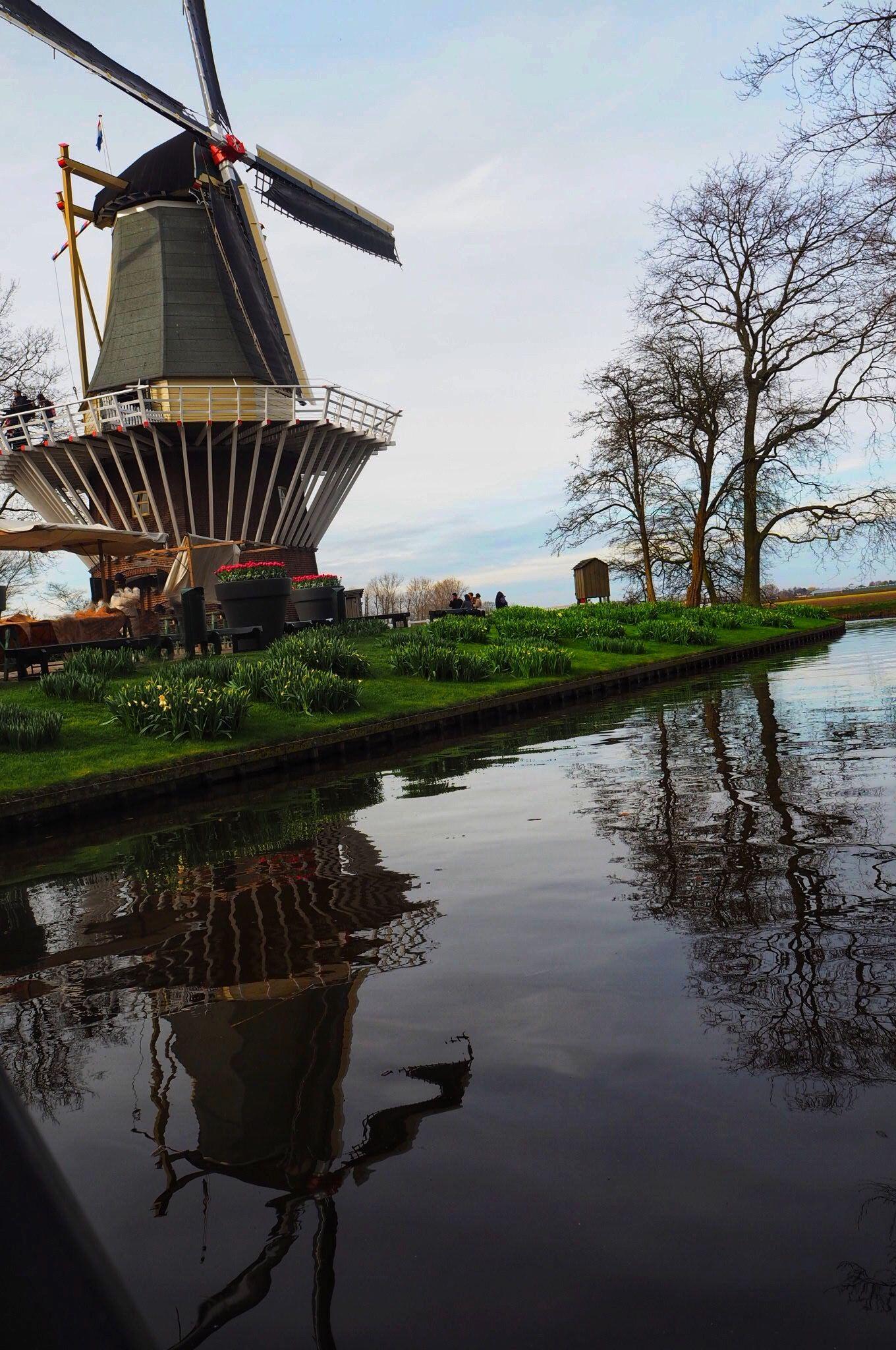Windmill reflections at Keukenhof Tulip Gardens Lisse
