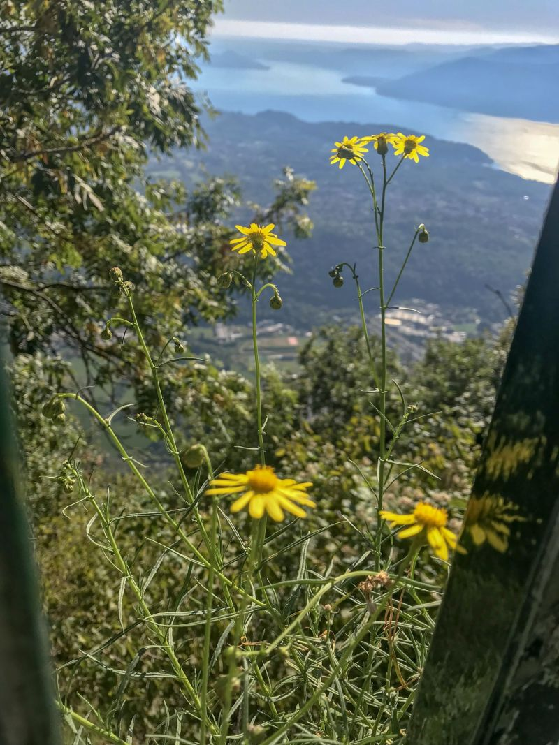 wildflowers atop Sasso del Ferro mountain