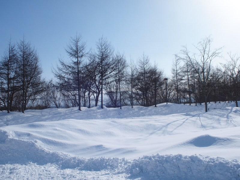 Softest powder snow Hokkaido Japan