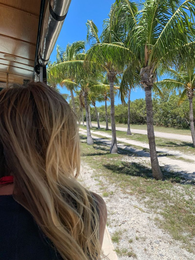 Palm-tree-views-old-town-trolley-tour-Key-West-Florida