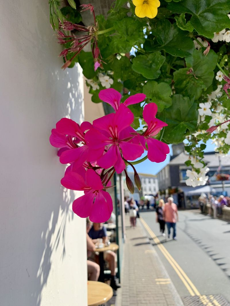 Floral-scenery-in-Looe-Cornish-Coastal-Town
