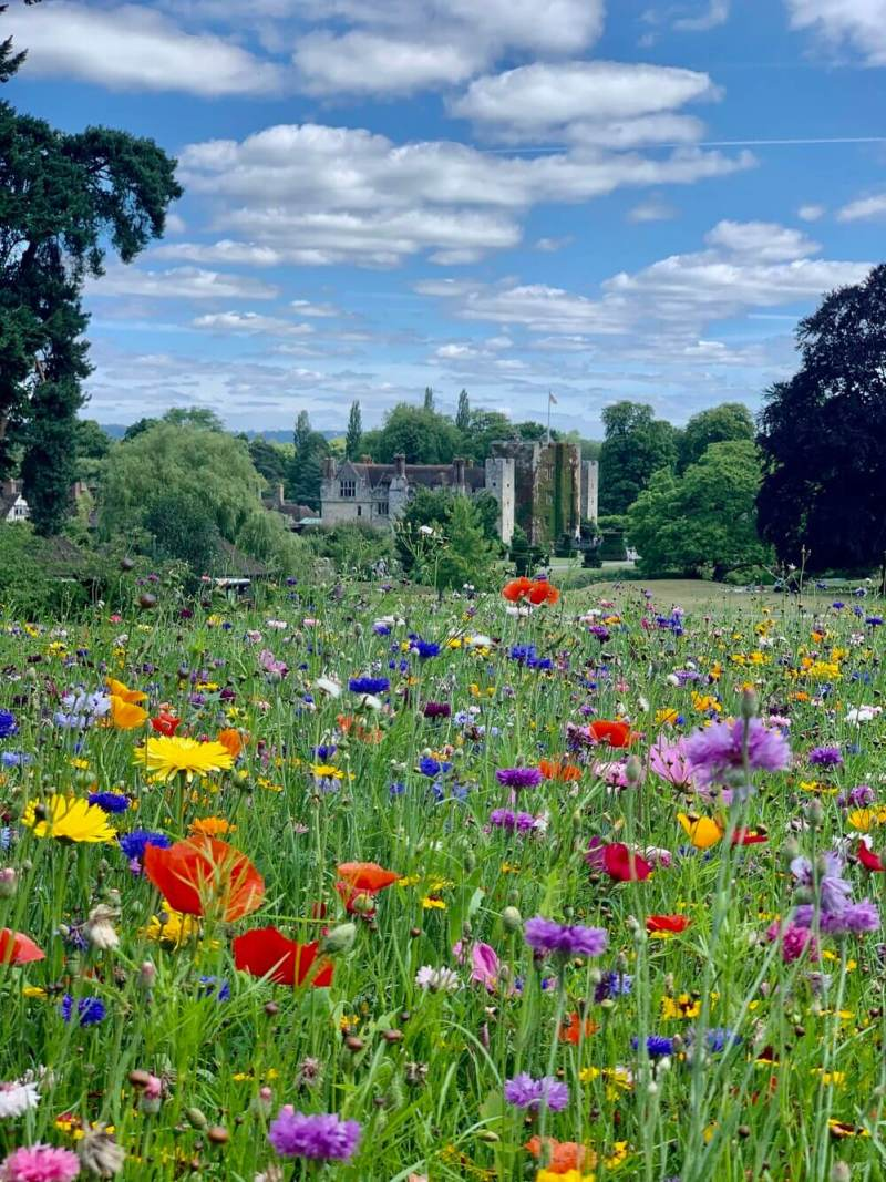 Colourful Wildflowers at Hever Castle Kent