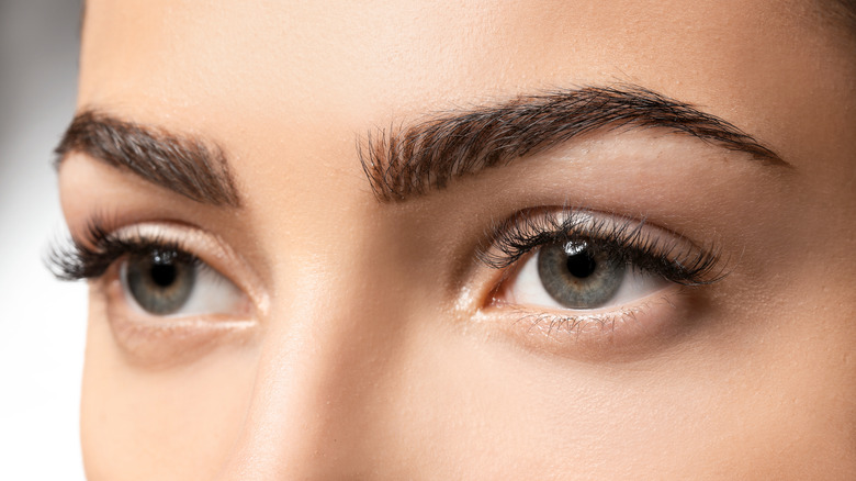 images Perfect Eyebrow Shape Pictures the perfect eyebrow shape for your face
