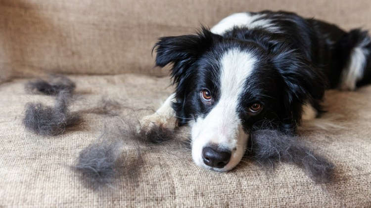 The Surprising Tool You Need To Get Rid Of Pet Hair Is Already In Your House