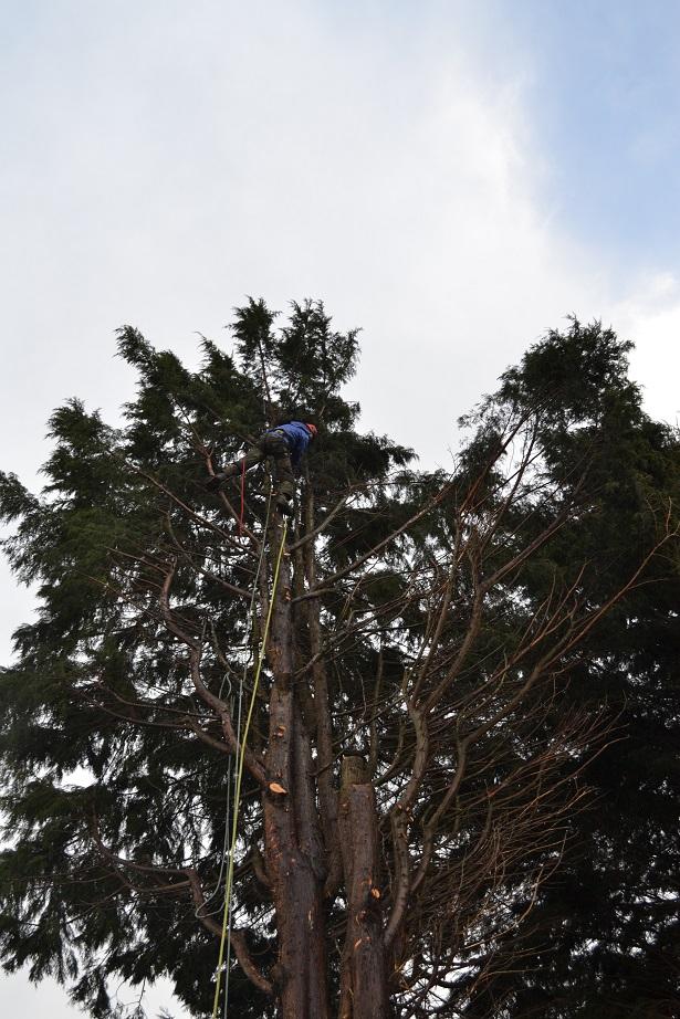 march 2016 conifer fell 1
