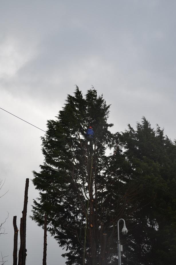 march 2016 conifer fell 2