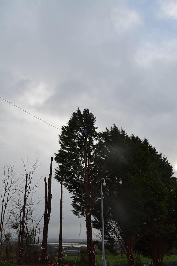 march 2016 conifer fell 3