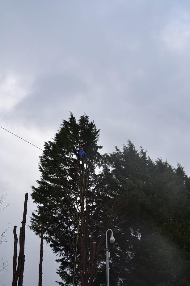 march 2016 conifer fell 4