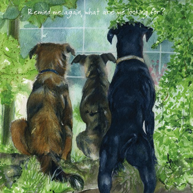 Rescue Dogs Greeting Cards Watchdogs The Little Dog