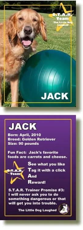 Jack, Lori Gamroth's Golden Retriever partner