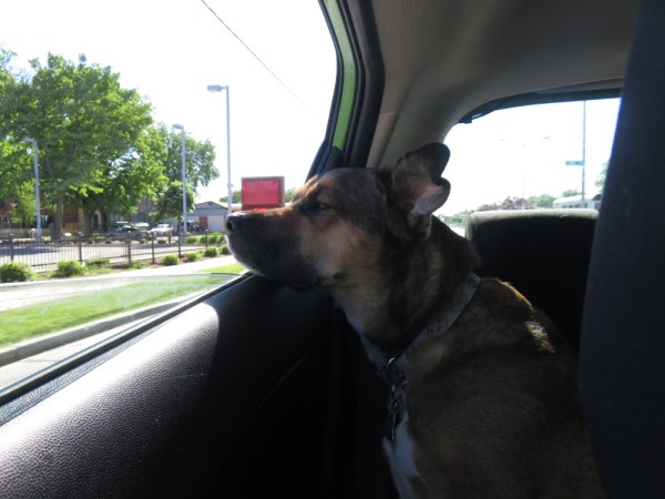 Finn enjoying the car ride
