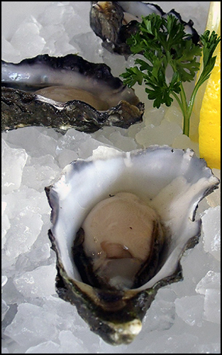 oyster_wiki