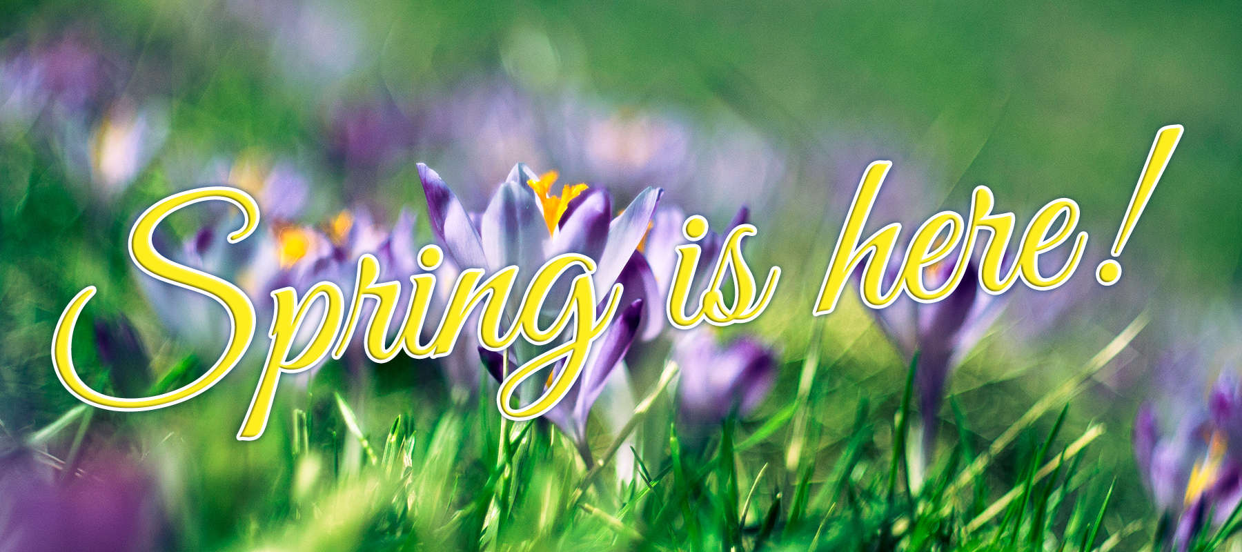 Try Something New This Spring
