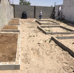 community garden at Las Alitas