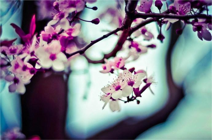 rula-sibai-pink-flowers