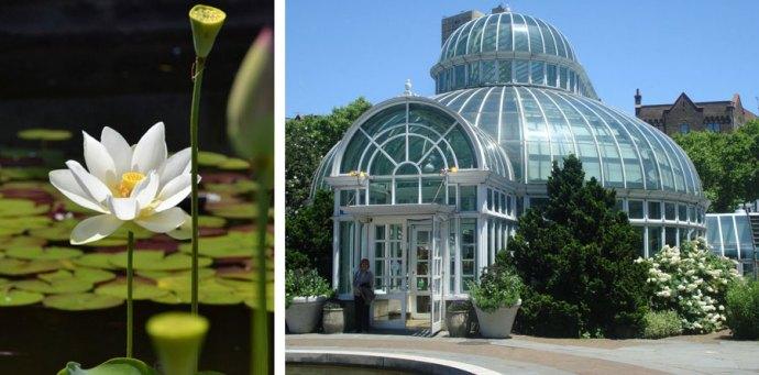 Brooklyn-botanic-garden-New-York