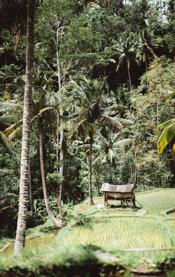 indonesia ubud bali