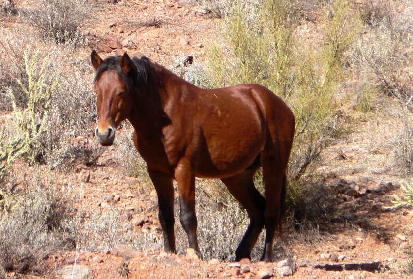 Bobby the Horse
