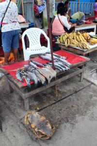Turtle in Market