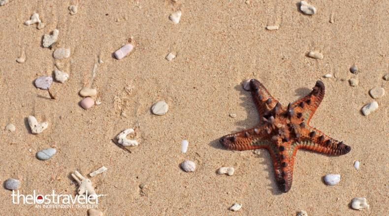 bintang-laut-tablolong