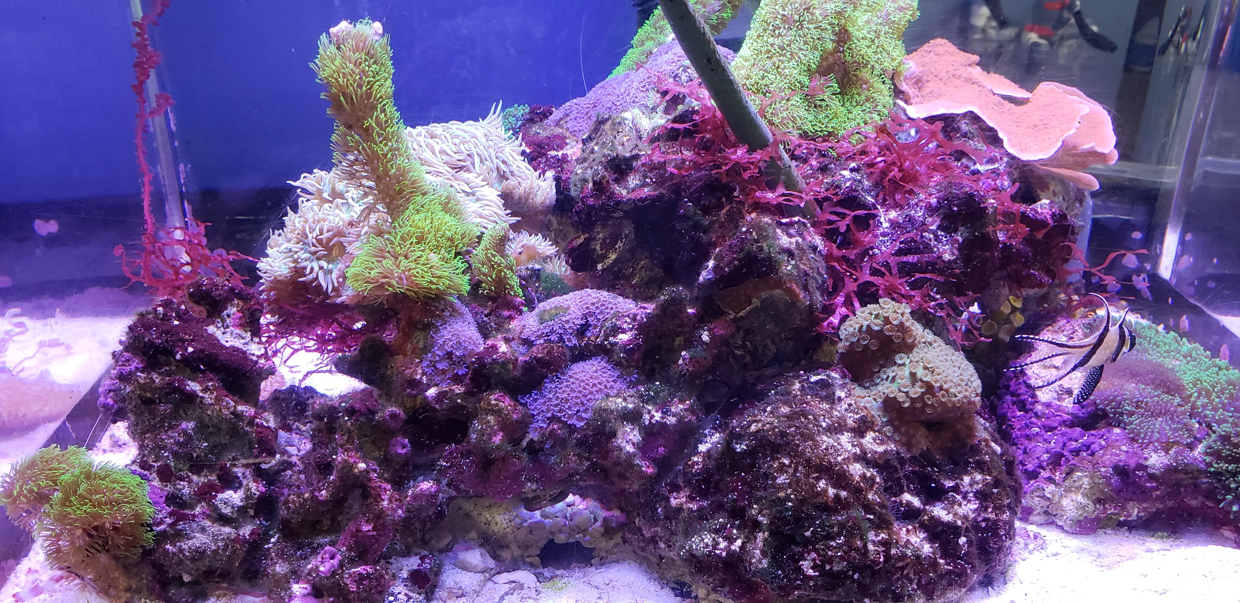 gallery the love aquarium