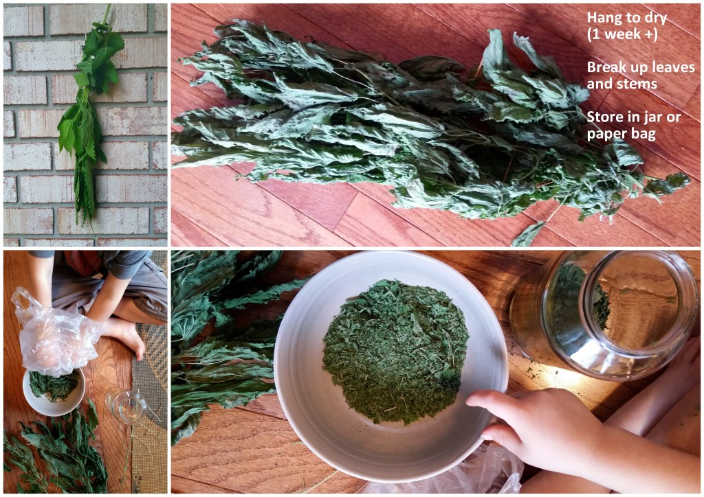 stinging nettle tea dry herbs edible plant weed green forage healthy recipe garden jackie lane ottawa l'oven life