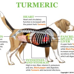 Dog Vital Organs Diagram Wiring For Carrier Ac Turmeric Dogs In North Kitsap County The Lucky Pup