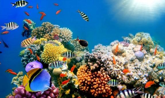 Un viaje para nadar junto a Nemo