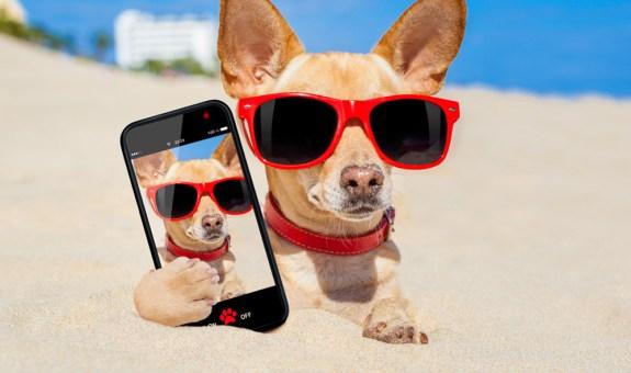 Las mejores apps de entretenimiento para mascotas
