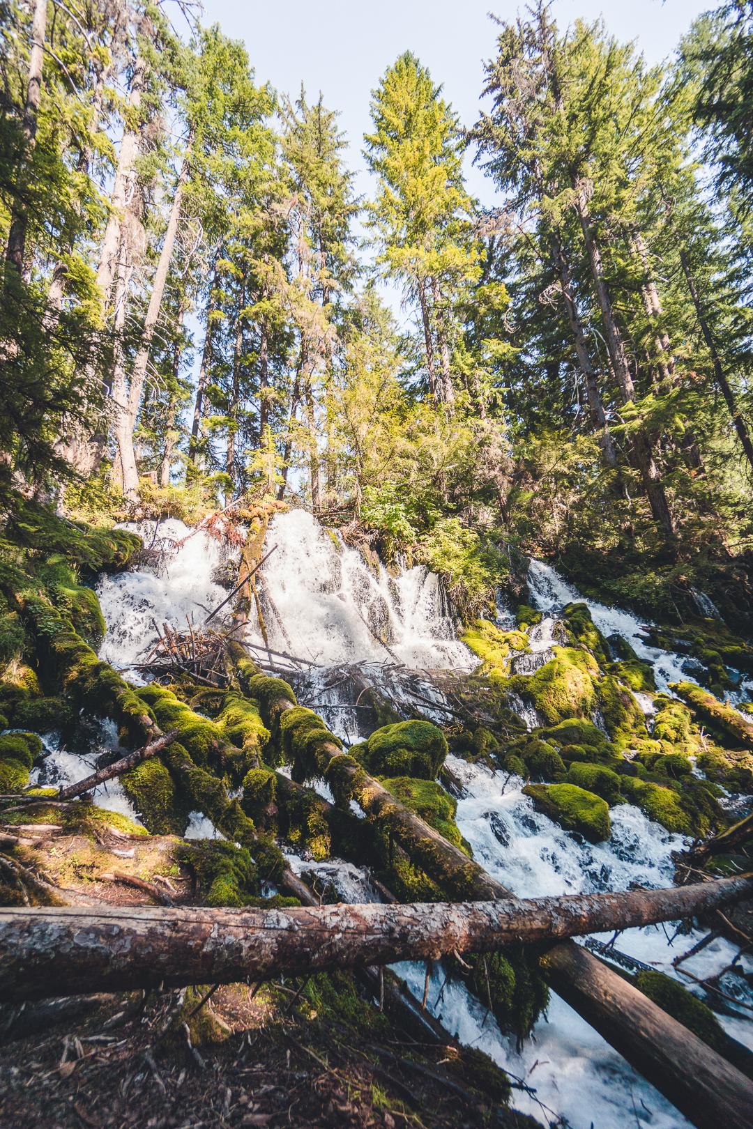 Clearwater Falls in Umpqua National Forest