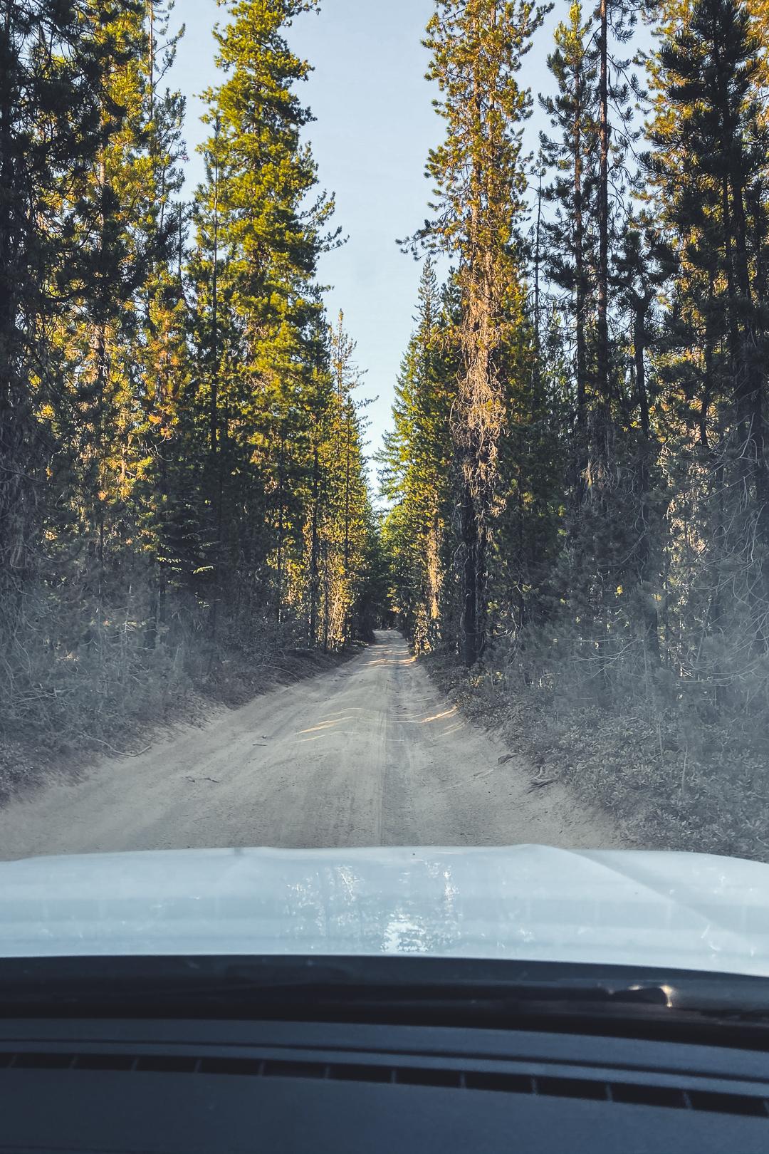 Bumpy Dirt Road to the Lemolo Falls South Trailhead