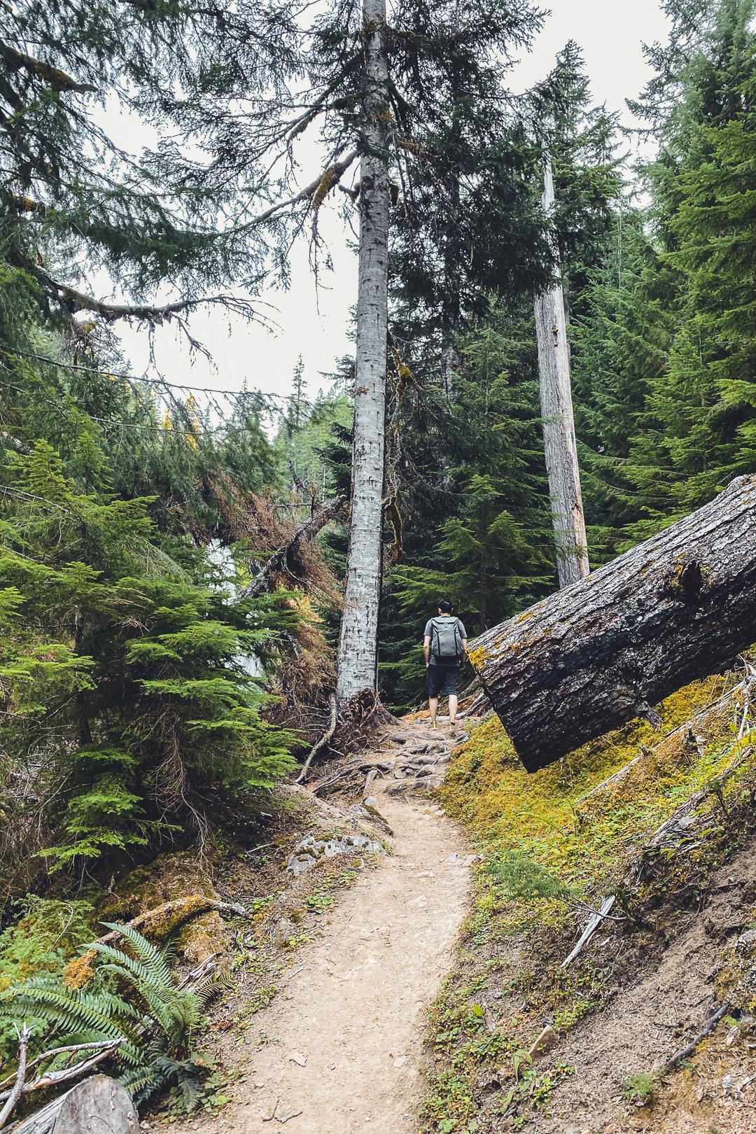 Lemolo Falls South Trail