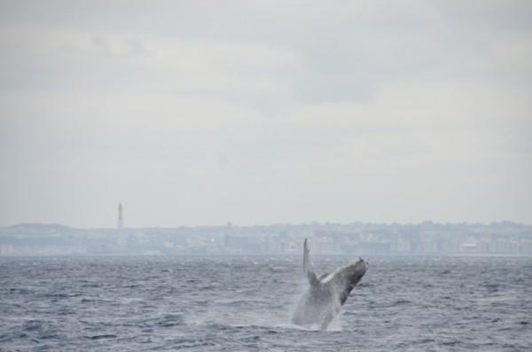 humpback-whale-japan_9784