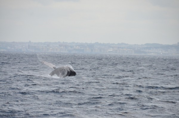 whale-watching-japan_9786