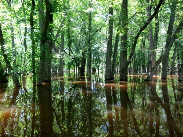 bark-river-wisconsin-canoeing-006