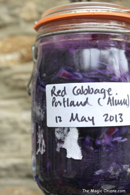 Natural Dye using the Sun - Red Cabbage - www.theMagicOnions.com