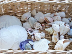 Crafting with Natural Materials - Shells- Discovering Waldorf :: www.theMagic Onions.com
